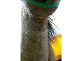 horse - post Ecosin application