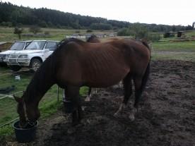 kůň - stav po aplikaci Ecosinu